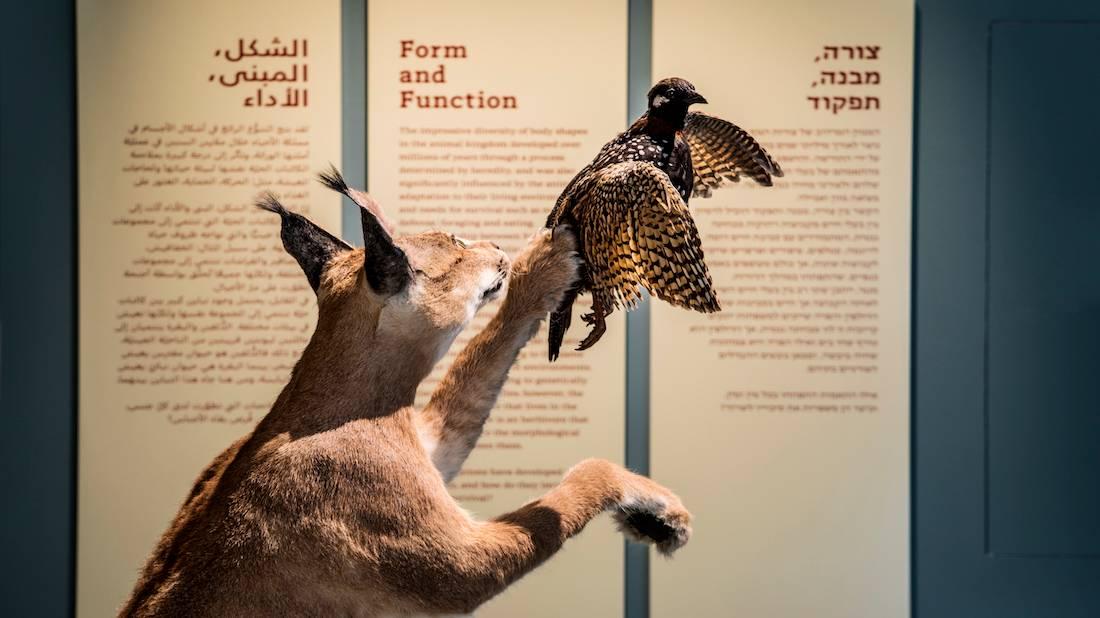 תערוכות המוזיאון - smnh