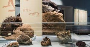 מייצגים מתוך התערוכה : צורה, מבנה ותפקוד