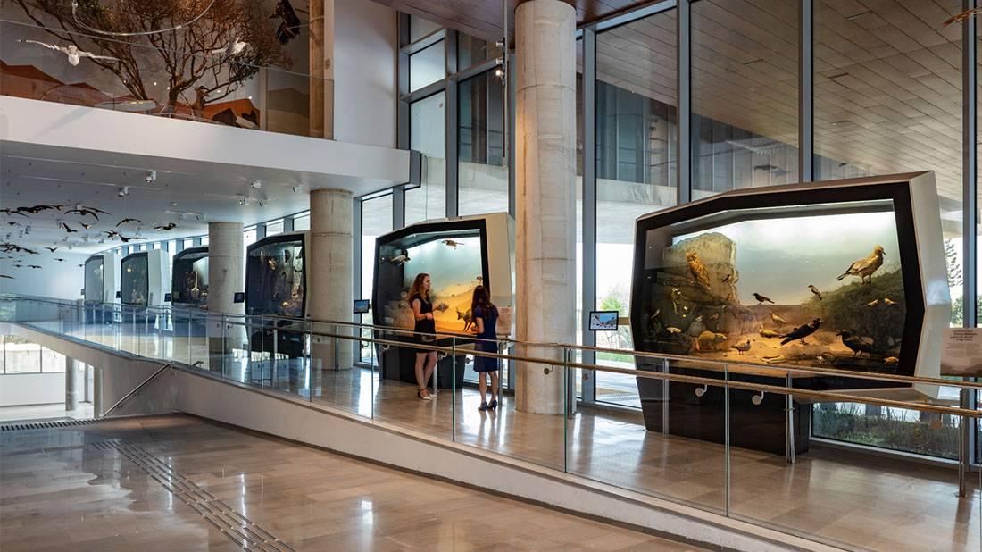 מייצגים במוזיאון הטבע