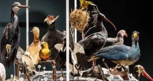 מפגש ציפורים מתוך האוסף