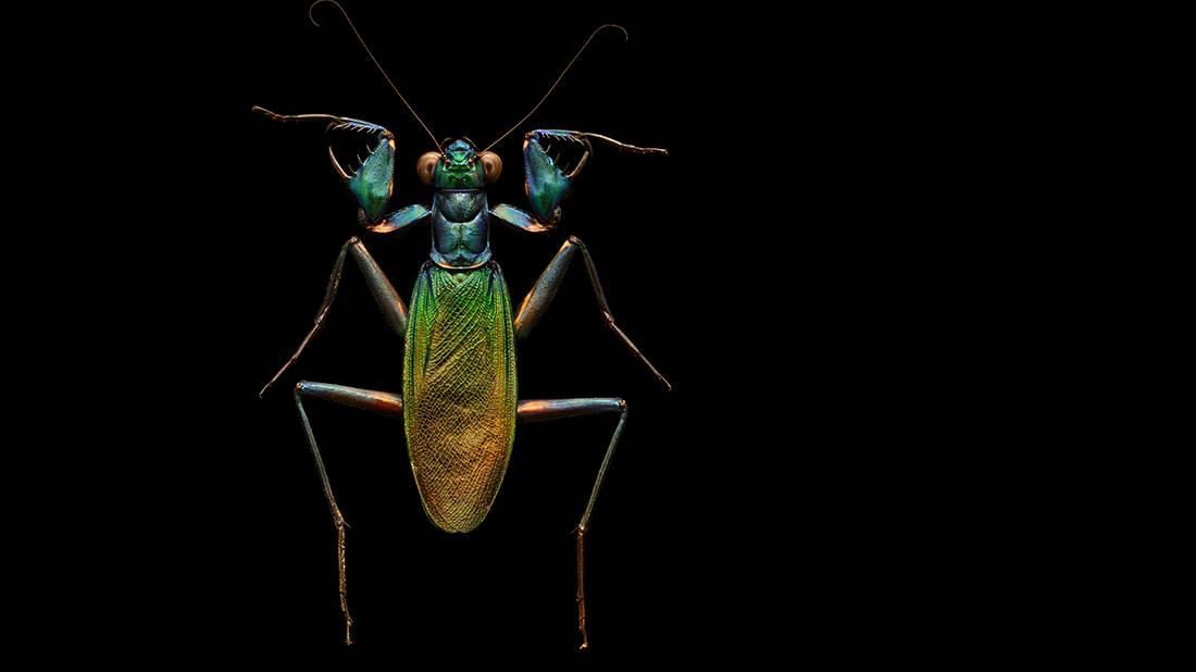 חרקים ובגדול