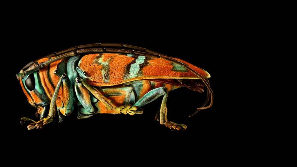 צילום מתוך התערוכה MICROSCULPTURE מאת לבון ביס