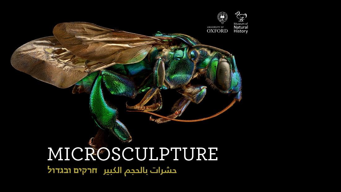 תצלומי החרקים של לבון ביס