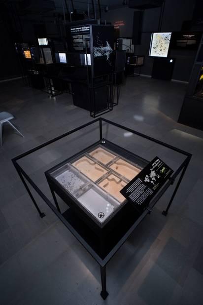 מושבת הקמפונית הקדושה במוזיאון הטבע. צילום: עוז ריטנר