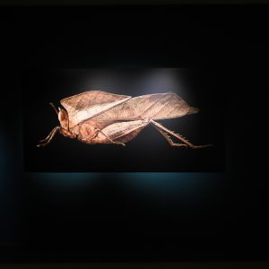 Dead leaf grasshopper from the exhibition, Microsculpture, by the photographer, Levon Biss.