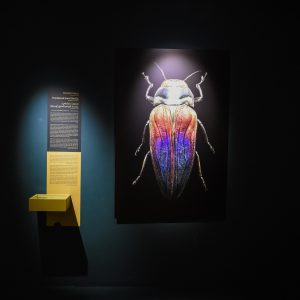 From the exhibition, Microsculpture, by the photographer, Levon Biss. Gallery photo: Sion Moyal