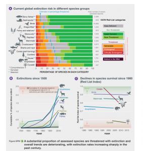 "הכחדת מינים, דו""ח האום, מקור: https://ipbes.net/sites/default/files/2020-02/ipbes_global_assessment_report_summary_for_policymakers_en.pdf"