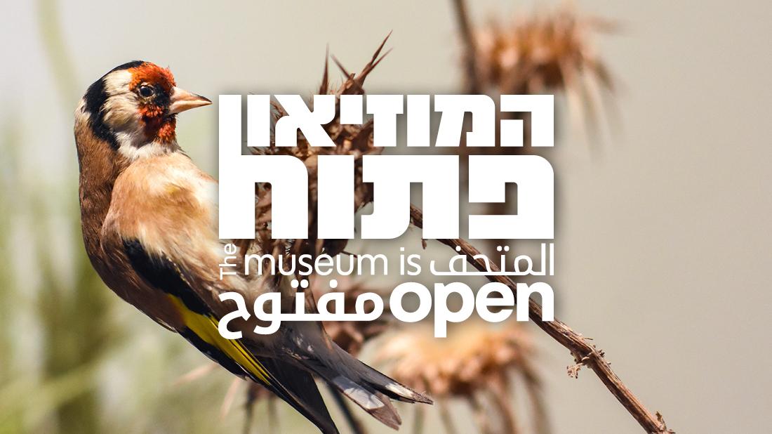 המוזיאון פתוח