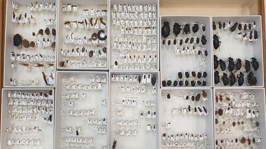 תיבה שבה חלק ממיני החרקים שנדגמו במחקר.